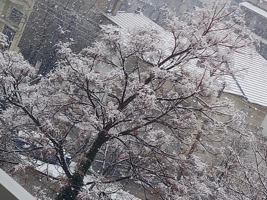 Σ. Αρναούτογλου: Νέα χιονόπτωση σήμερα το βράδυ στη Φλώρινα